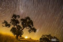 Perseid Star Trail